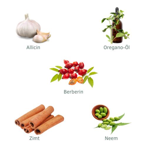 Allicin, Oregano-Öl, Berberin, Zimt, Neem